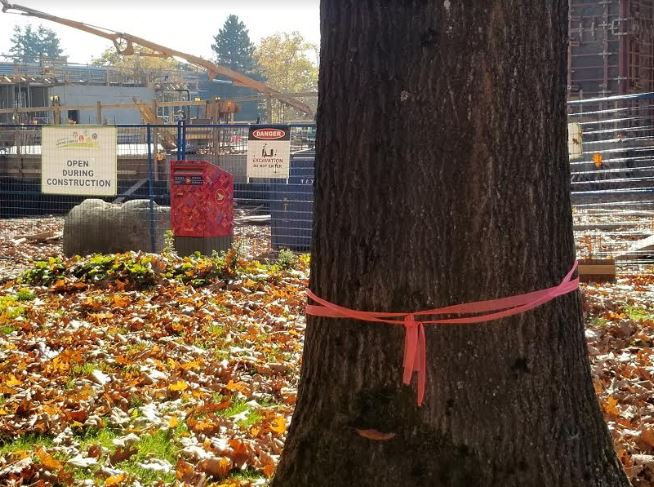 New PoCo Recreation Centre construction claims more trees