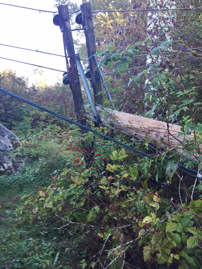 BC Hydro poles downed with chainsaw in Port Coquitlam – RCMP Investigating